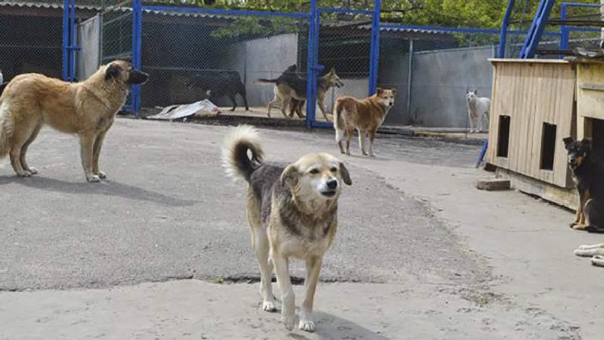 На Киевщине жестоко расстреляли собак, которые жили в приюте для животных