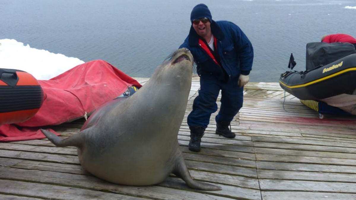 Українські полярники знайшли морського котика у своєму човні