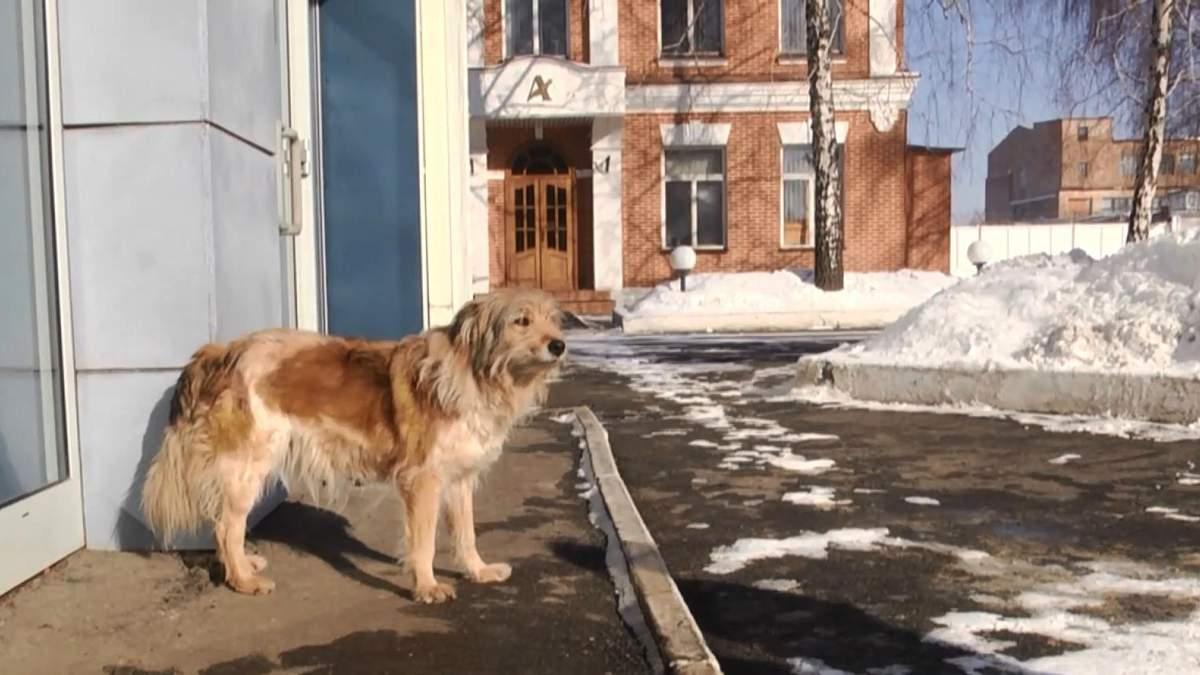 """Невероятная история харьковской """"Хатико"""": собака 4 года ждет своего хозяина"""
