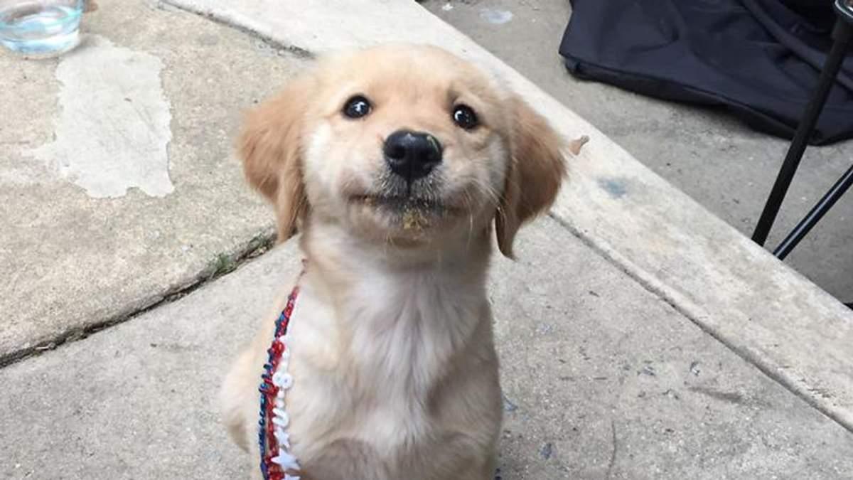 З собаками треба говорити ласкаво