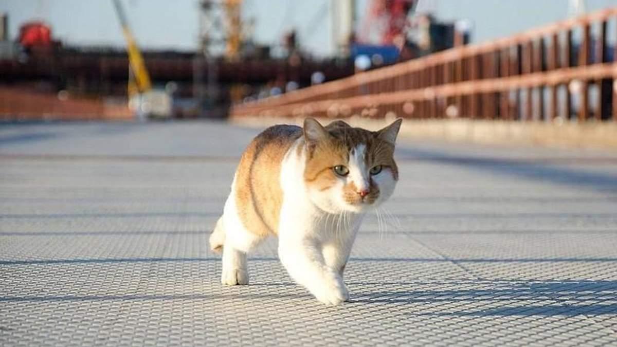 Кримський міст першим випробував не Путін, а кіт: кумедні фото