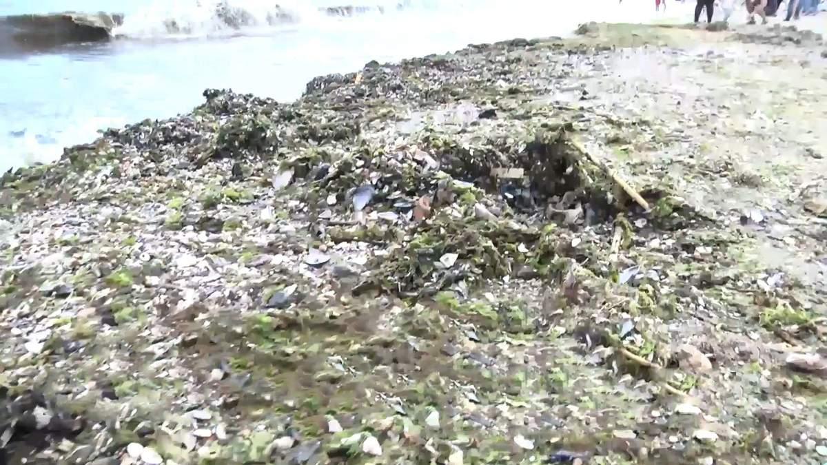 Страшные подробности экологического исследования Черного моря: что нашли ученые