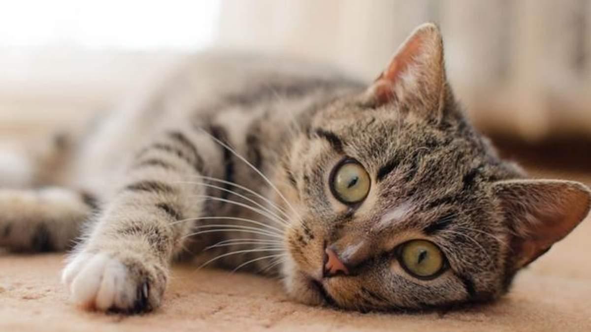 Мережа шаленіє від оптичної ілюзії з котом