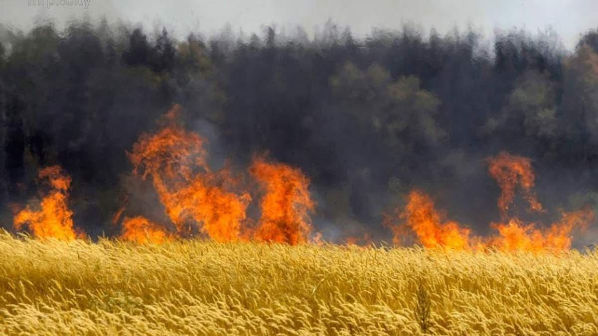 На Херсонщине сгорели 170 гектаров пшеницы