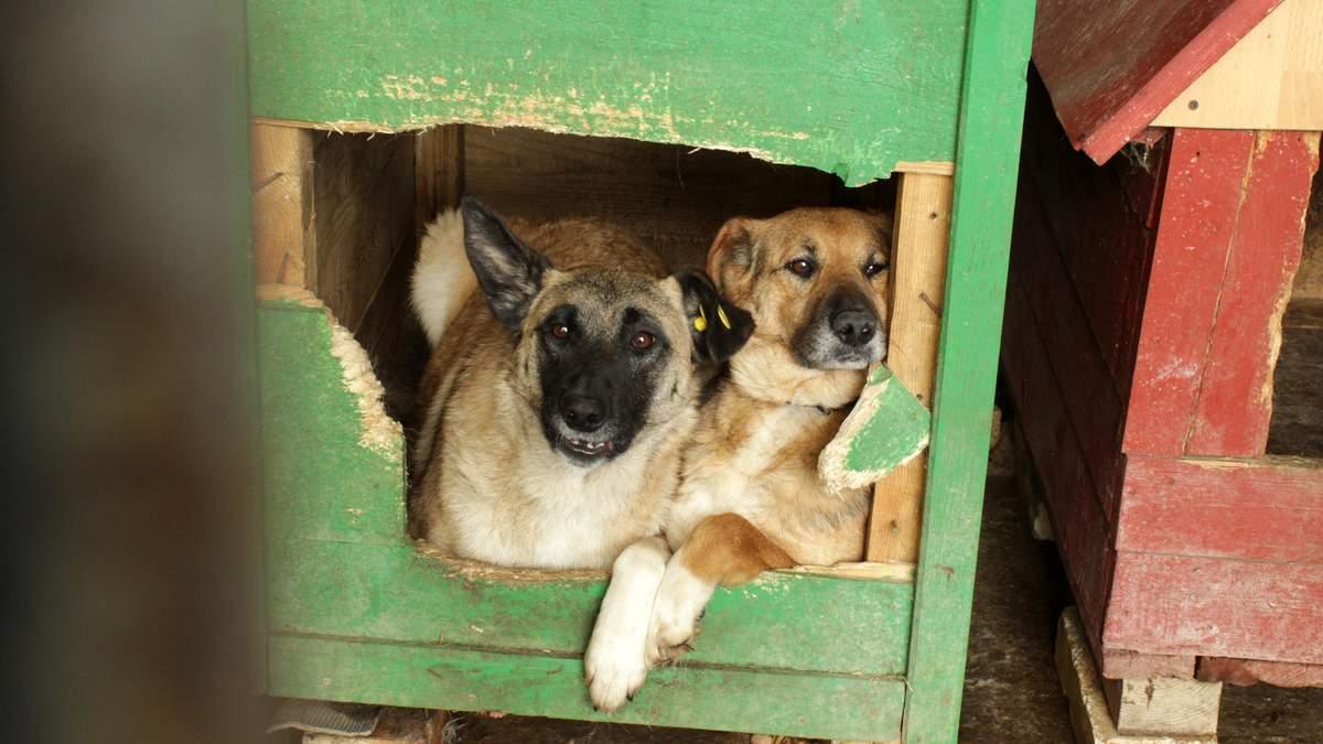 В Україні пропонують заборонити продаж котів та собак