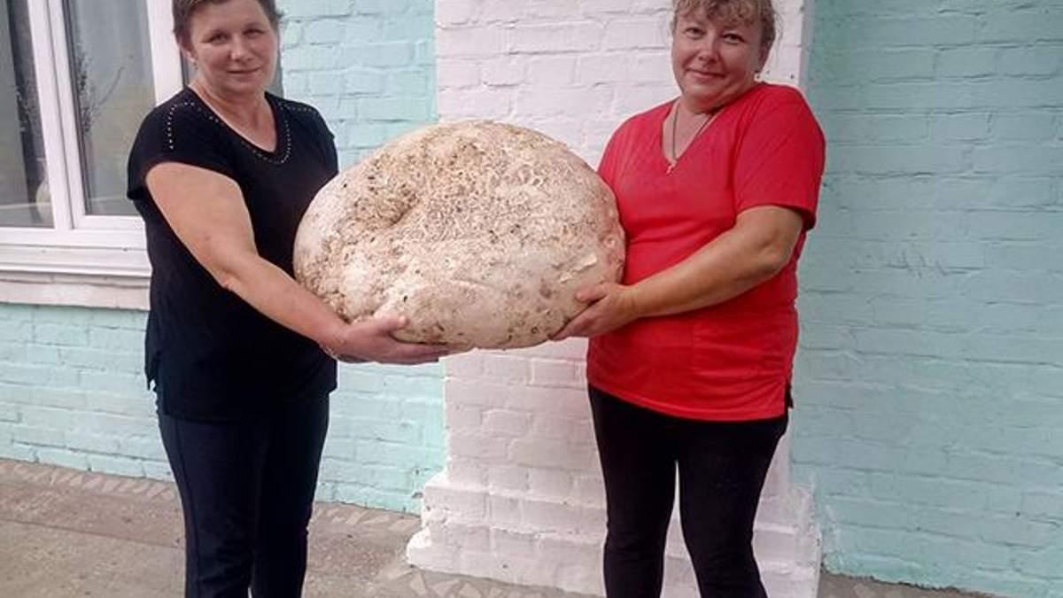 На Киевщине нашли гигантский гриб