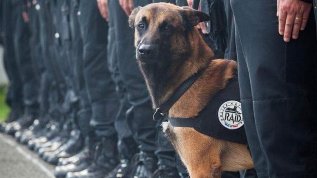 Колумбійська мафія полює на пса, який знайшов 10 тонн кокаїну