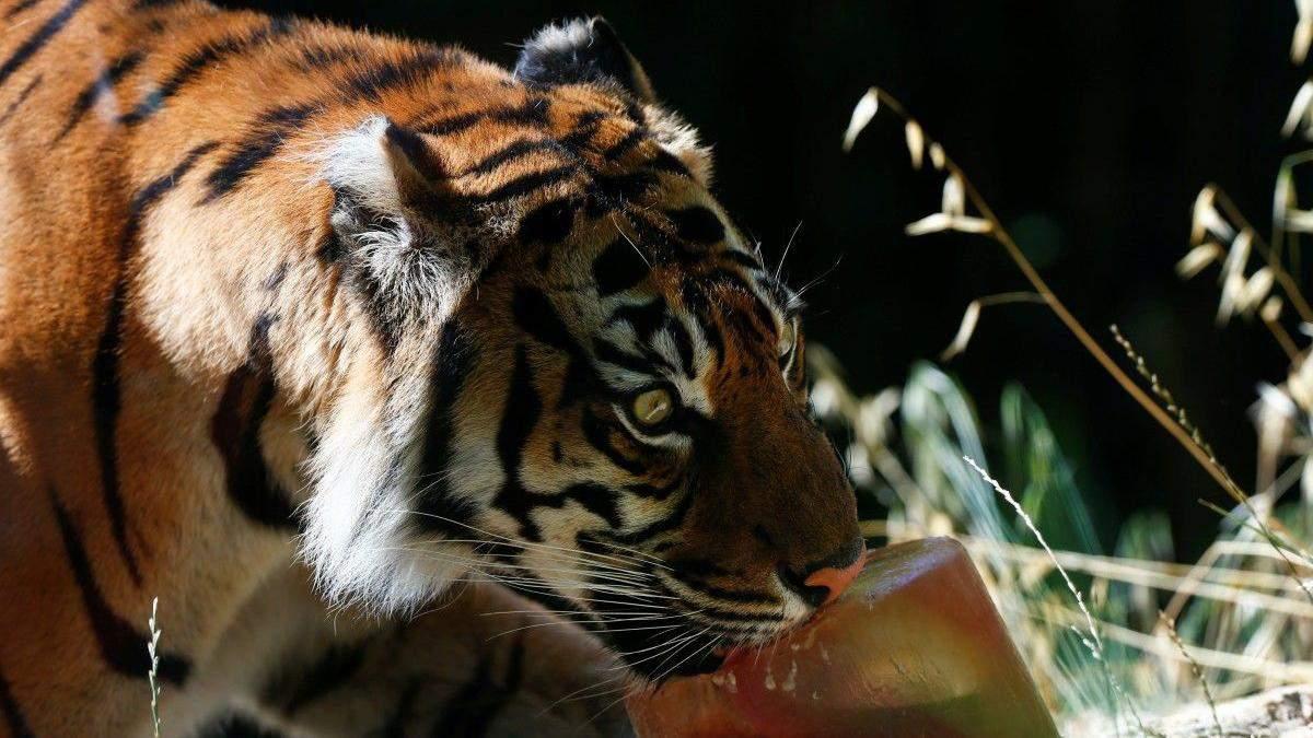 У римському зоопарку рятують тваринок від спеки