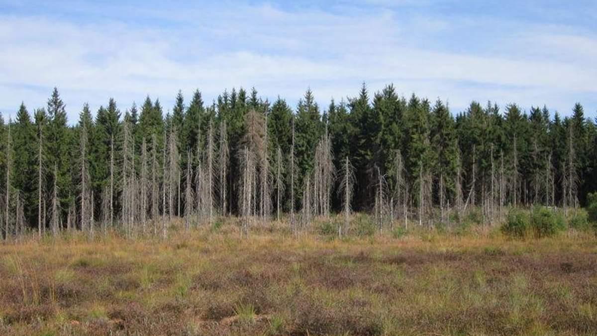 Станом на сьогодні загальна площа всихання становить майже 400 тисяч гектарів