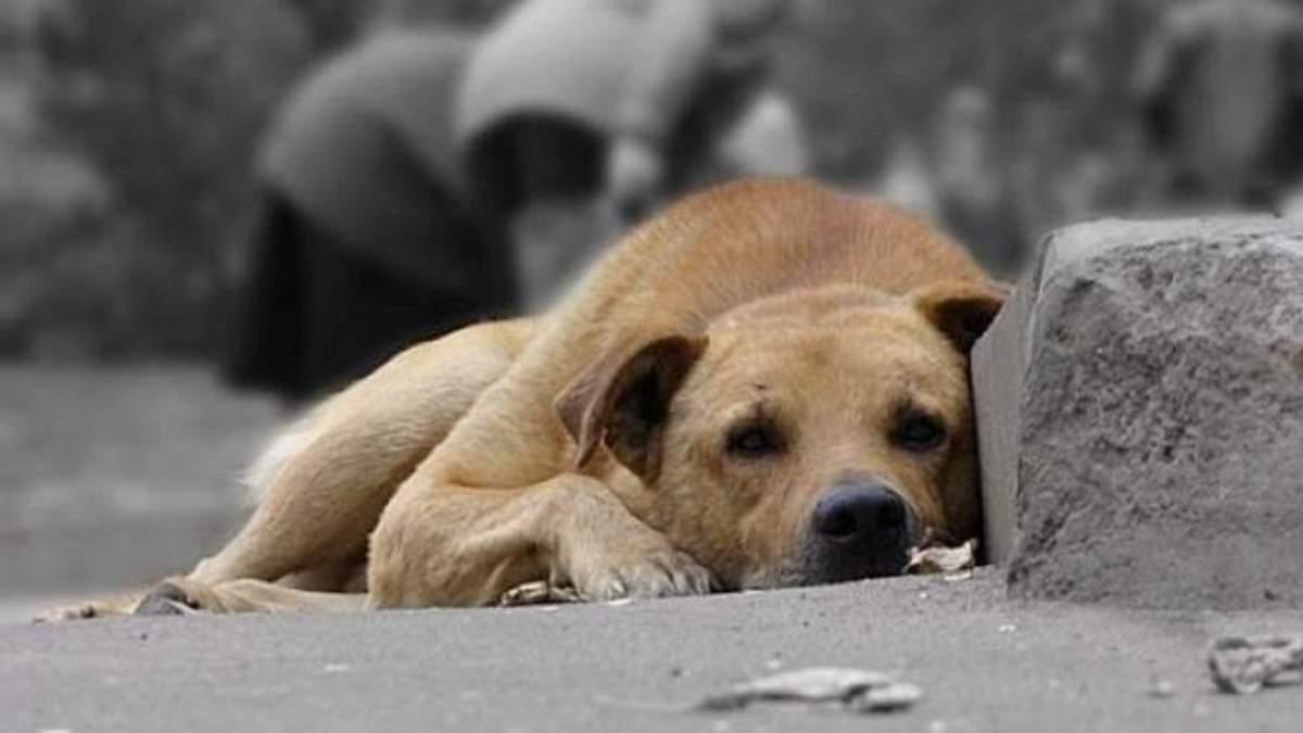Понад 2000 тварин можуть знову опинитися на вулиці