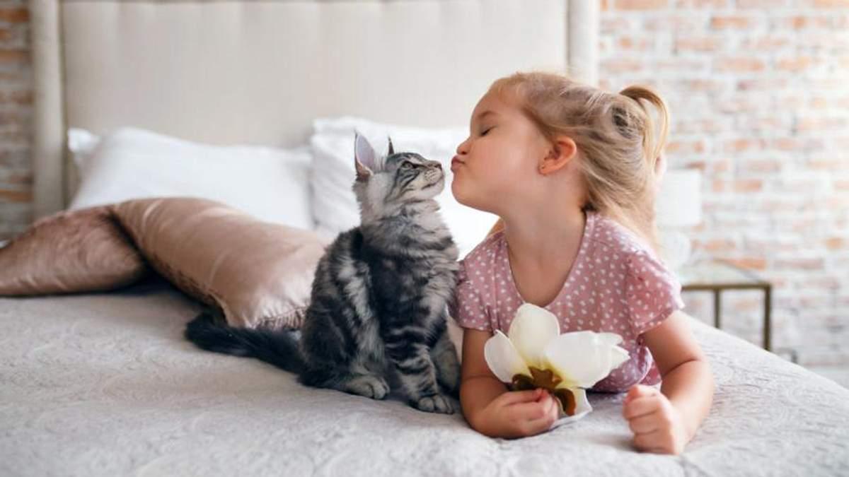 через сколько можно завести котенка после коронавируса