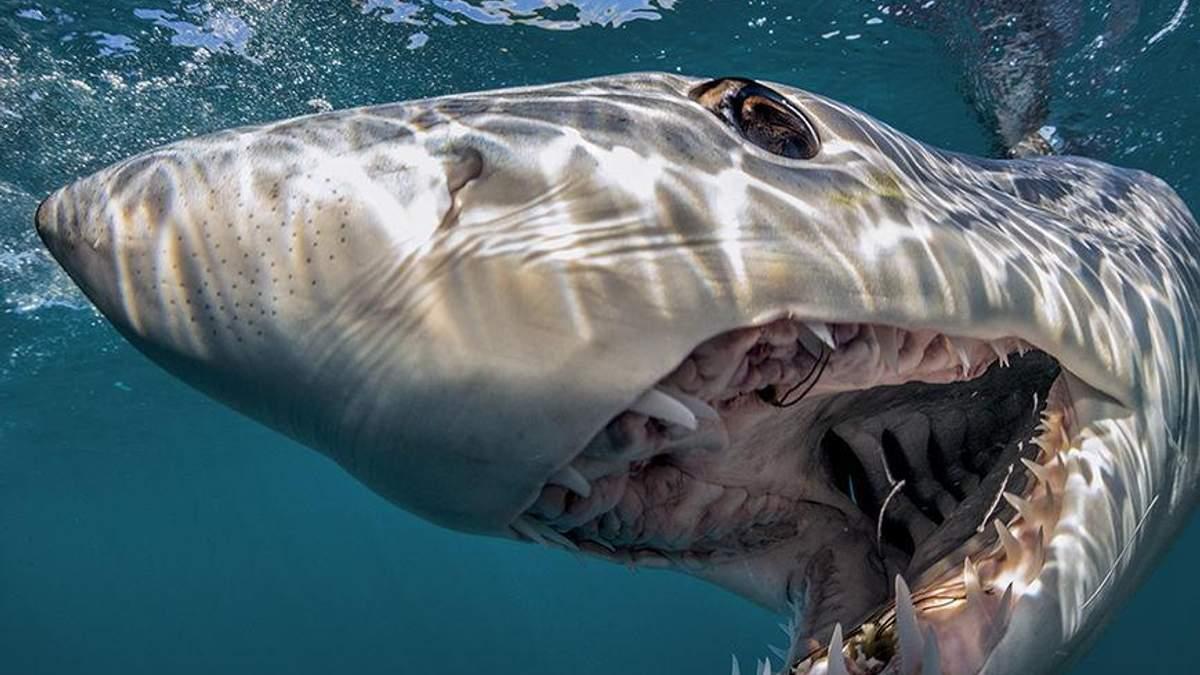 В Массачусетсе акула впервые за 80 лет убила человека
