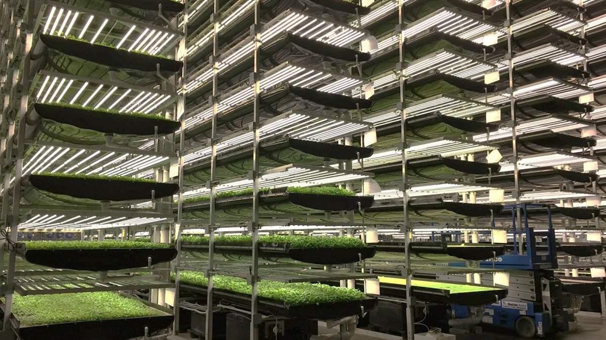 """Чим корисні вертикальні ферми – інноваційні """"грядки"""" для вирощування городини"""