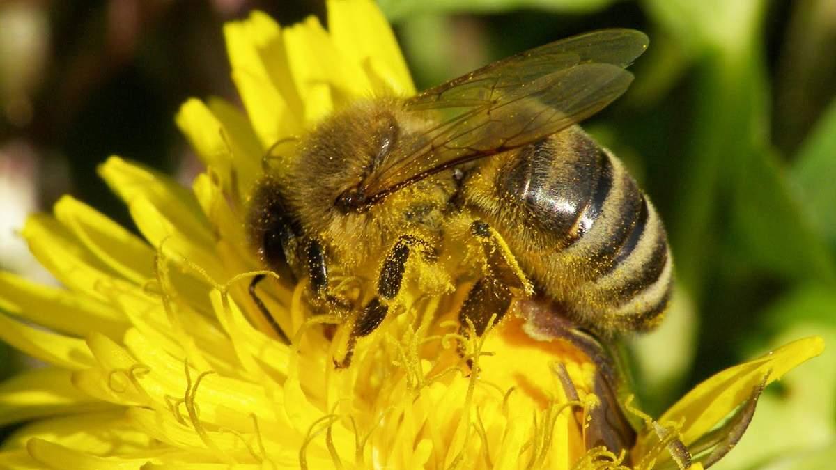 В Австрии мужчину приговорили к тюрьме за убийство пчел