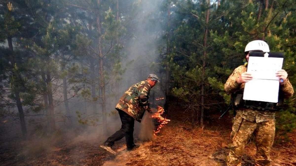 Які небезпеки приховують лісосмуги Донбасу