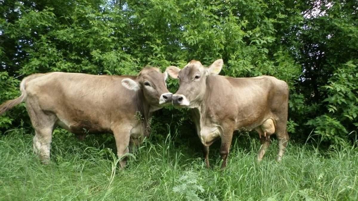 """""""Укрлендфарминг"""" предложил решение проблемы с дорогими кормами для животноводства"""