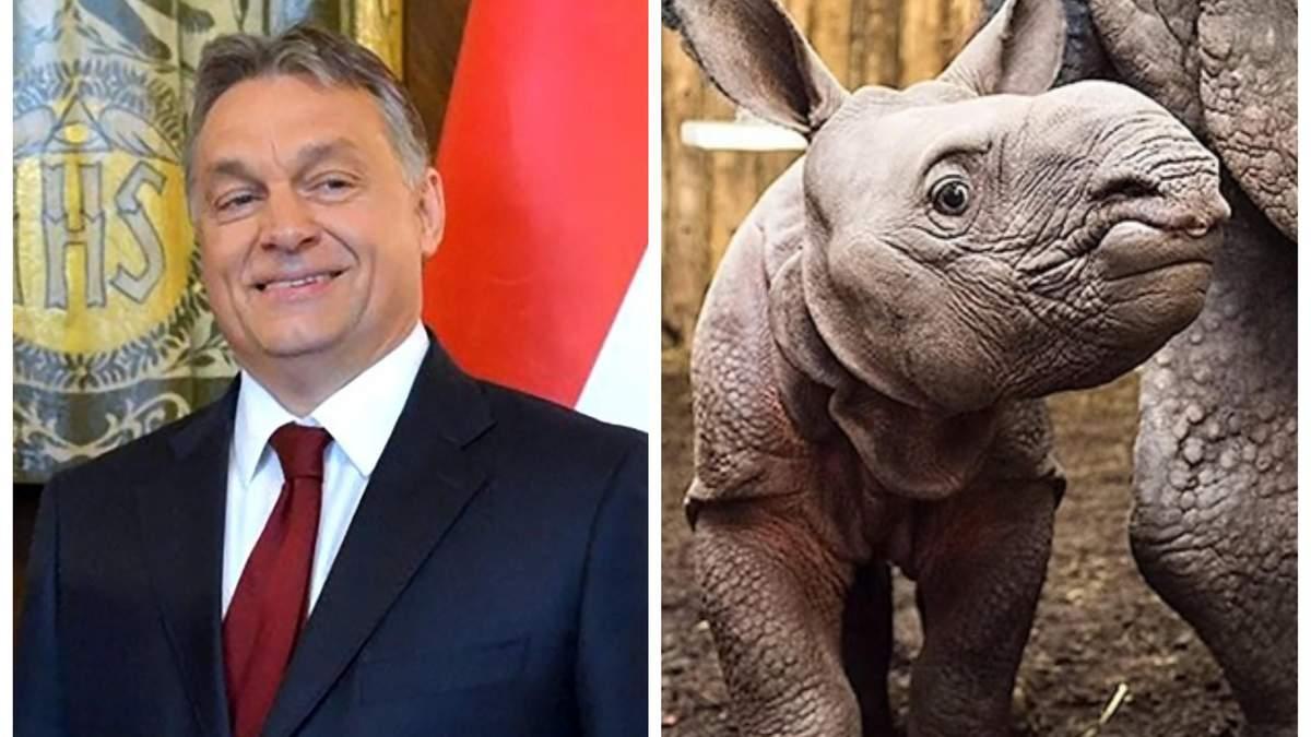"""Орбан """"усыновил"""" носорога"""