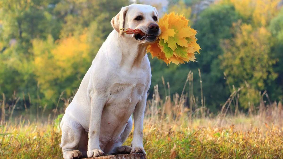 Собака потішно реагує на гору листя: відео, що підірвало мережу