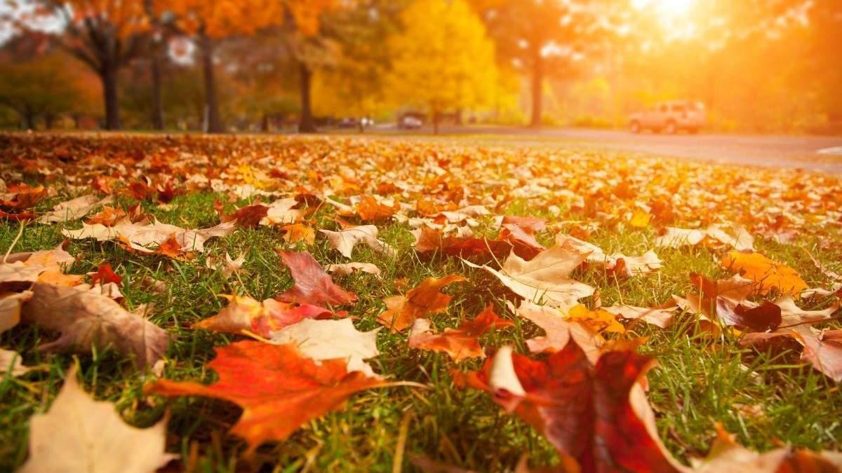 Аномально тепла осінь в Україні: екологи б'ють на сполох