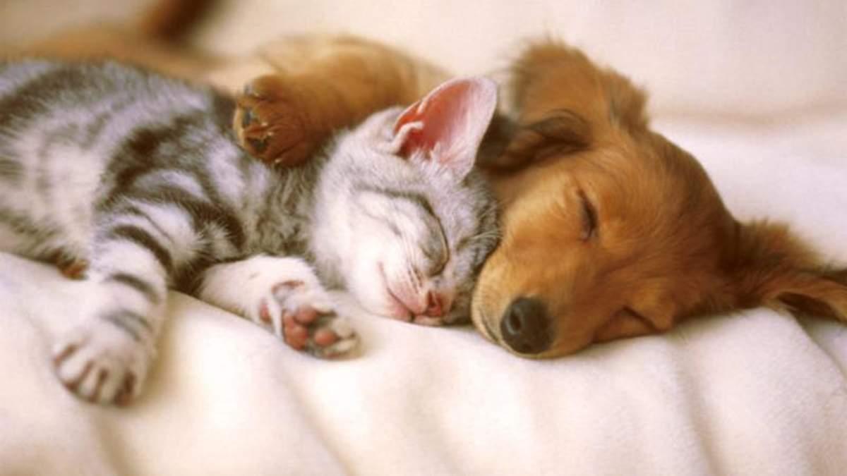 У Великобританії заборонили продавати цуценят і кошенят у зоомагазинах
