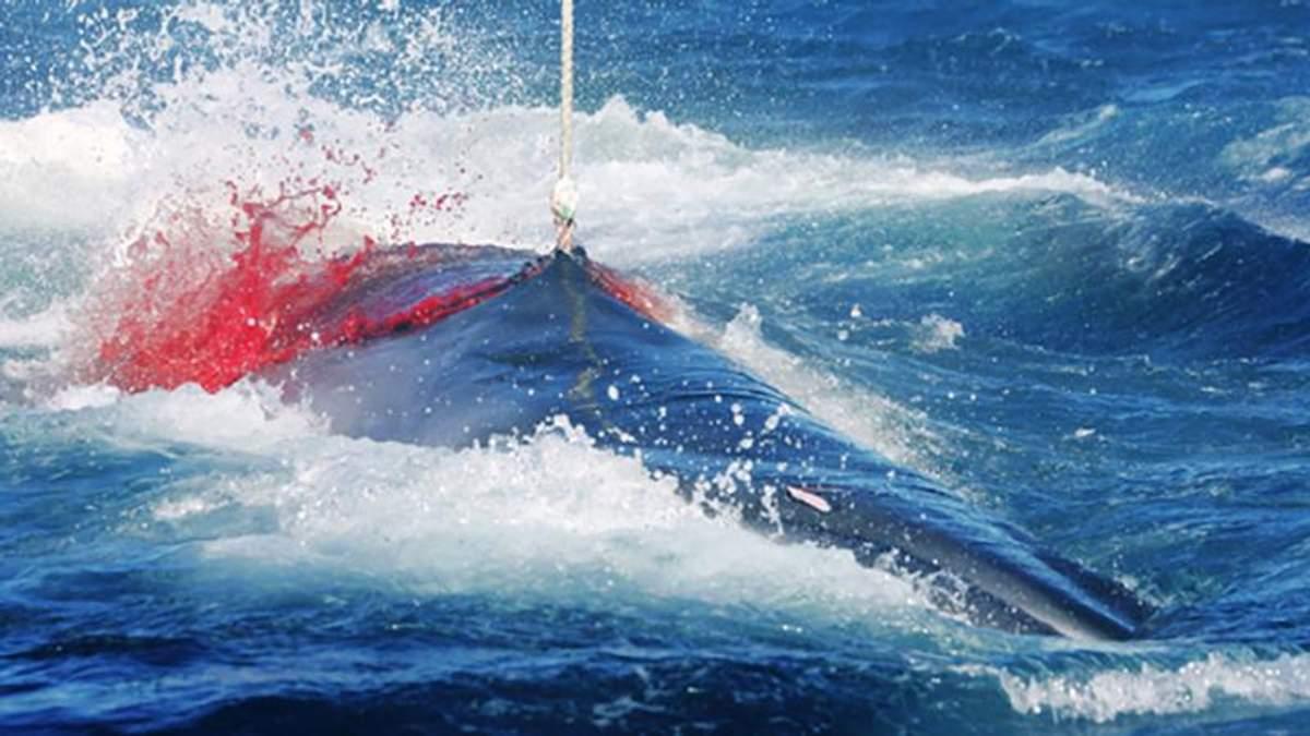 Японія відновить полювання на китів, яке заборонене у світі з 1986 року