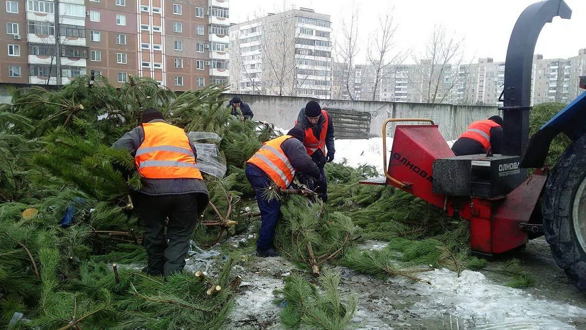 Где в Киеве утилизировать елку