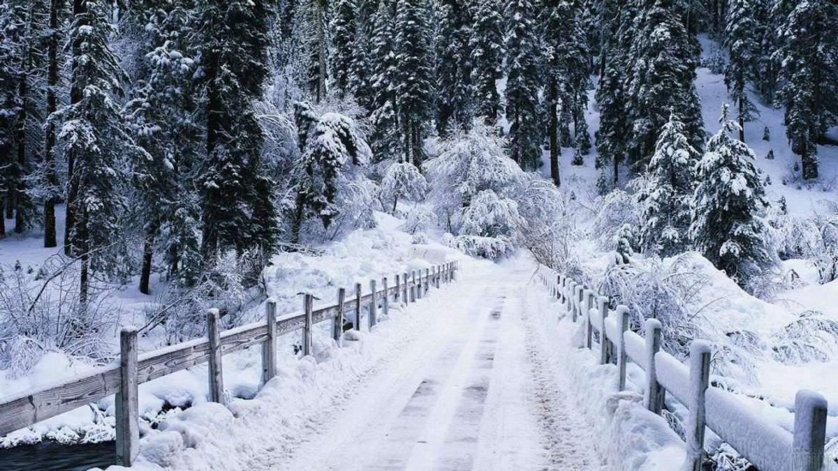 У Карпатах випало понад метр снігу: казкові фото та відео