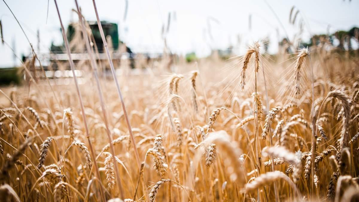 Украина попала в пятерку стран-лидеров по экспорту агропродукции в ЕС