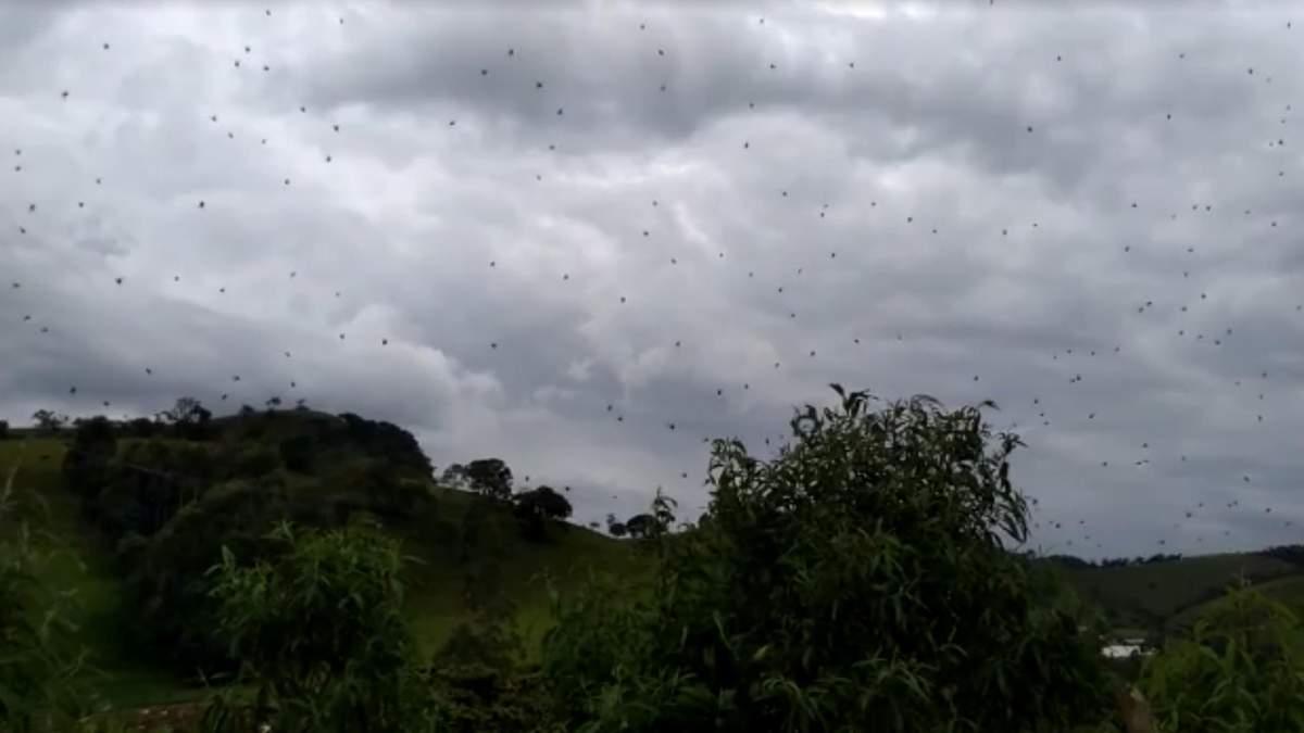 """В Бразилии зафиксировали масштабный """"дождь"""" из пауков"""