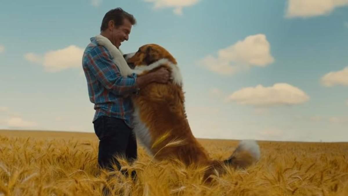 """Кадр з фільму """"Подорож хорошого пса"""""""