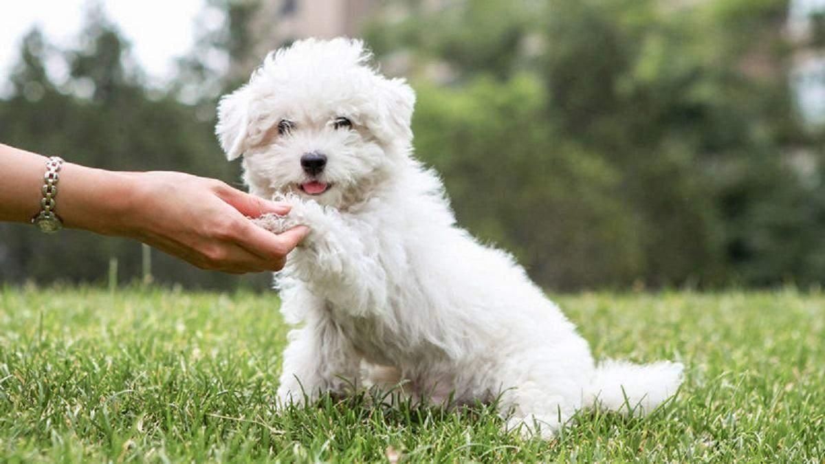 Royal Canin: відгуки, історія і цікаві факти
