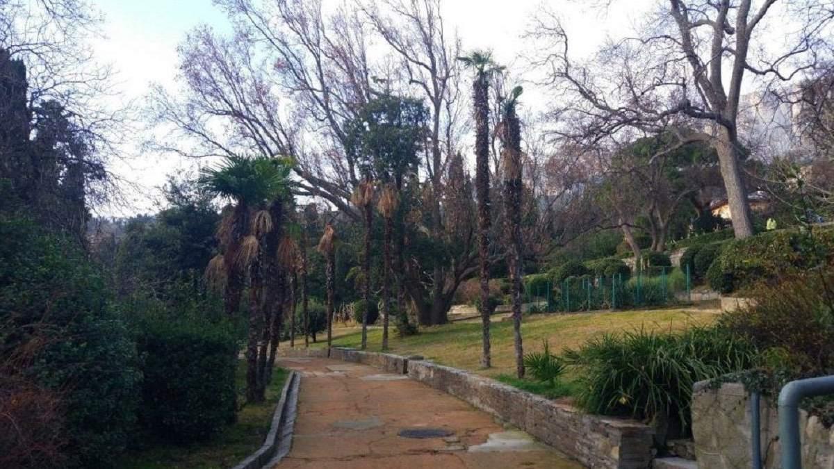 В Алупкинском парке погибли 200-летние пальмы