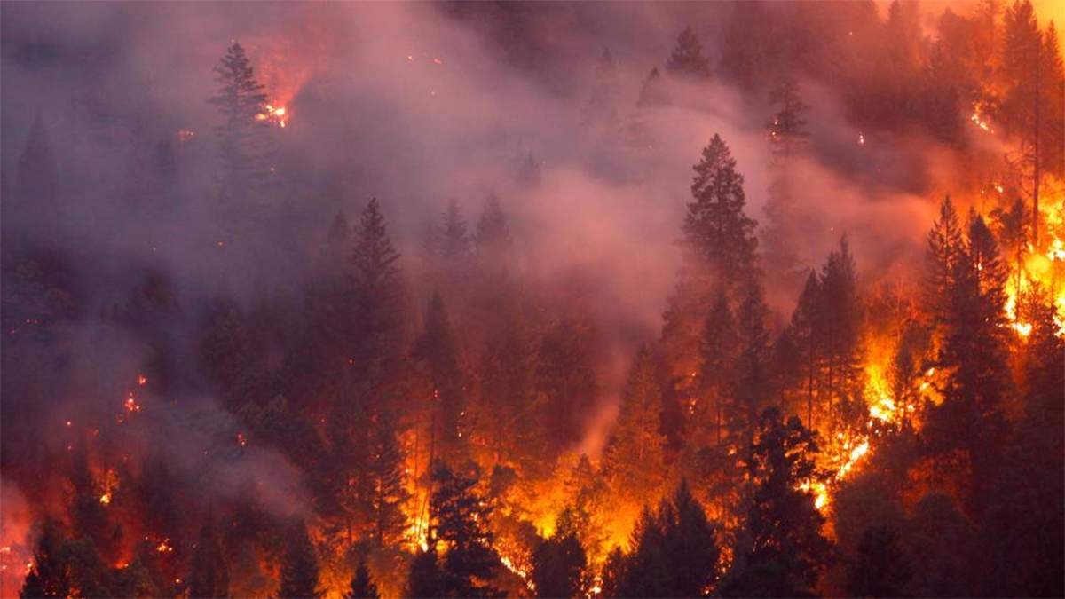 В Новой Зеландии сильнейший лесной пожар за последние 60 лет