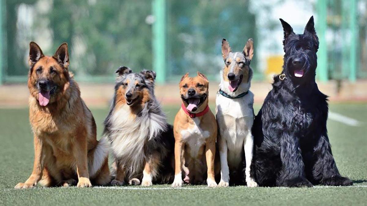 Во французском городе собакам запретили лаять