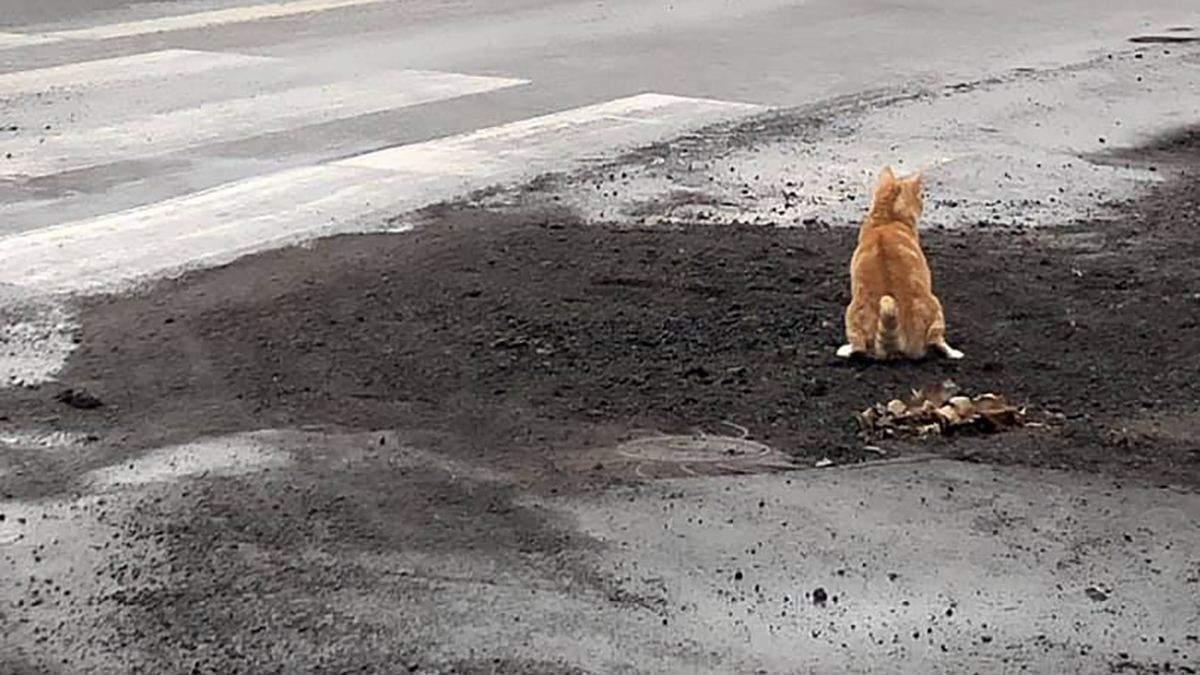 """От хто це робить з дорогами: у Миколаєві кіт """"оцінив"""" якість свіжого асфальту – епічне відео"""
