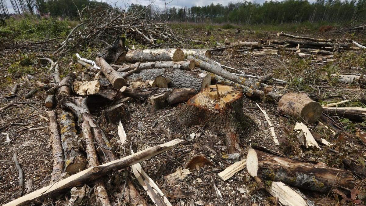 Ліси зникають
