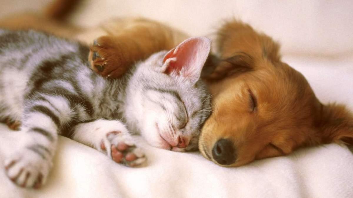 Коти проти собак