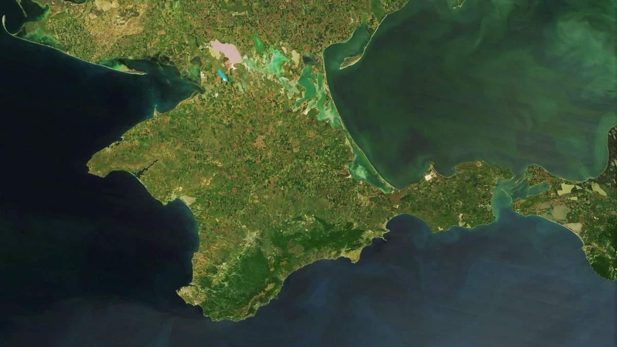 Нове еколихо: в окупованому Криму через засолення ґрунтів гинуть дерева