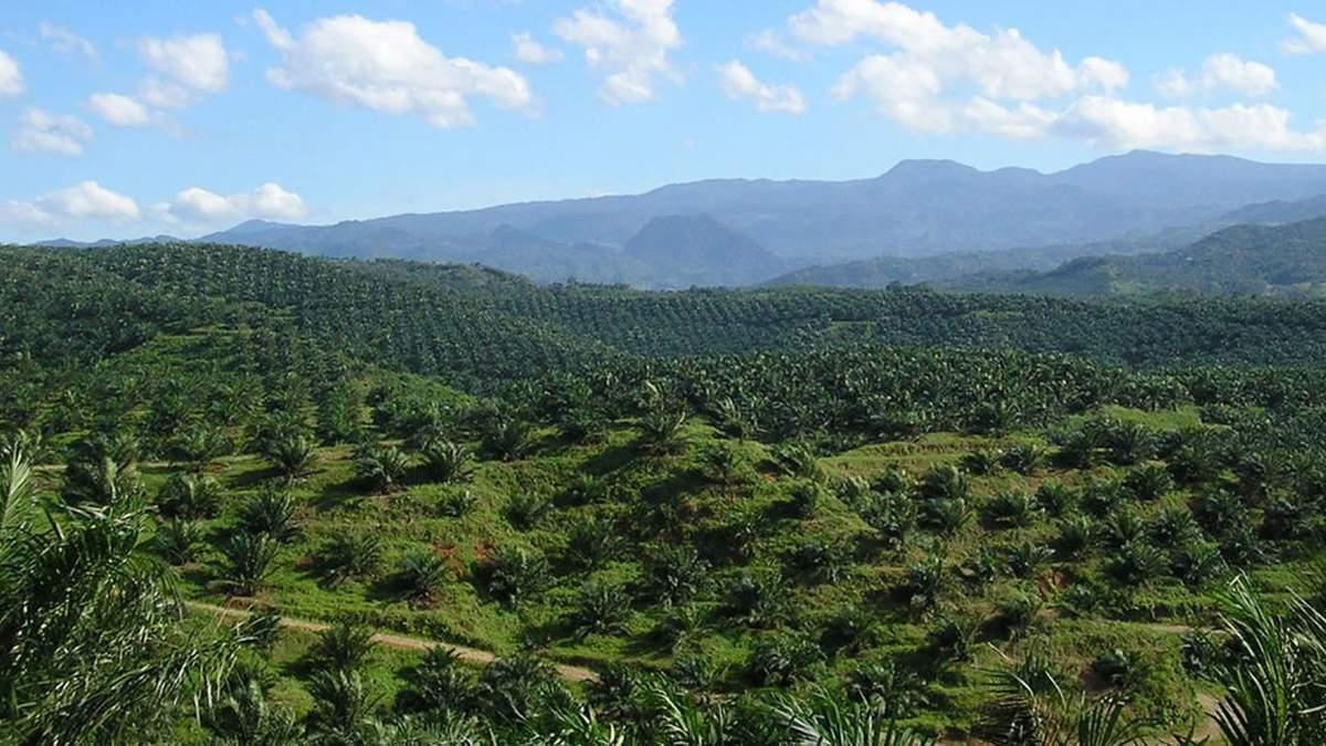 Євросоюз планує відмовитися від використання пальмової олії
