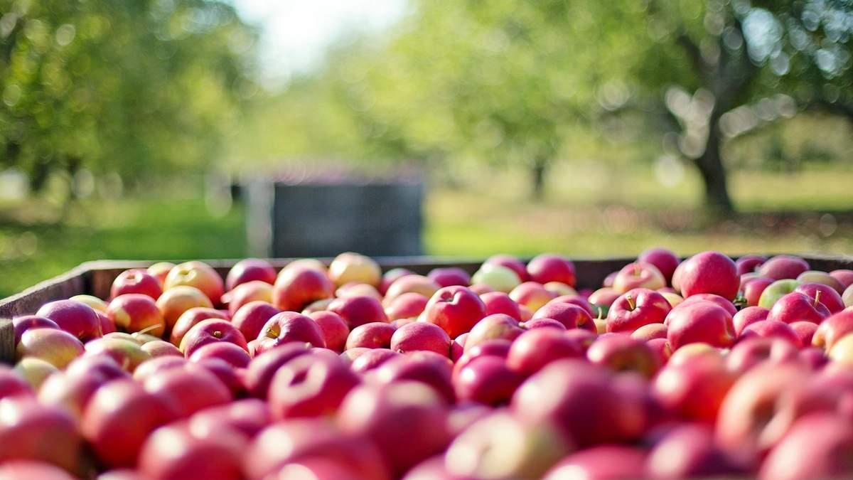 Україна експортуватиме яблука та інші фрукти до ОАЕ