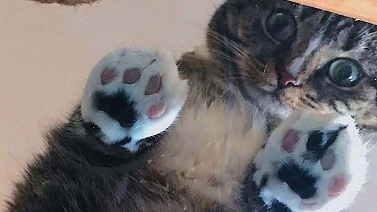 Коты показали, зачем людям стеклянные поверхности: забавная фотоподборка для хорошего настроения