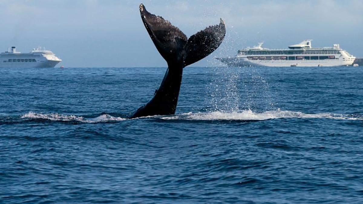 """У Японії кит """"протаранив"""" пором"""