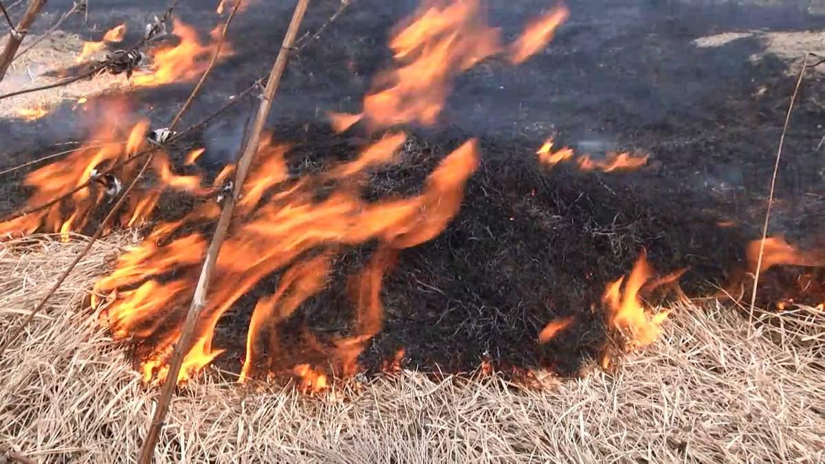 Поджог травы – опасно и вредно