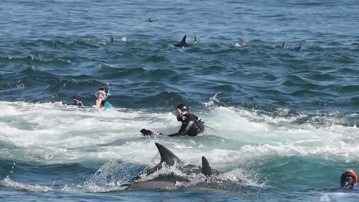 Кит проглотил дайвера, но сразу же выплюнул его обратно в океан: фото