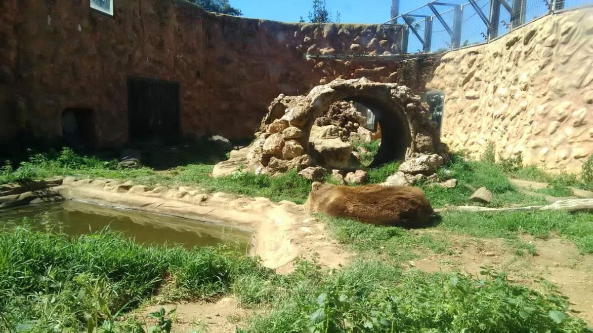 В Испании закрыли зоопарк, а зверей оставили умирать в вольерах: фото и видео