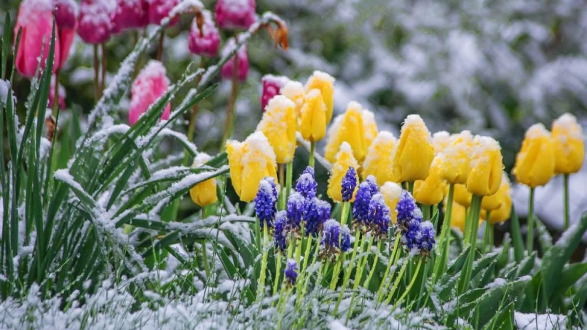 Заморозки в Україні з 15 квітня 2019 - прогноз погоди де похолодає