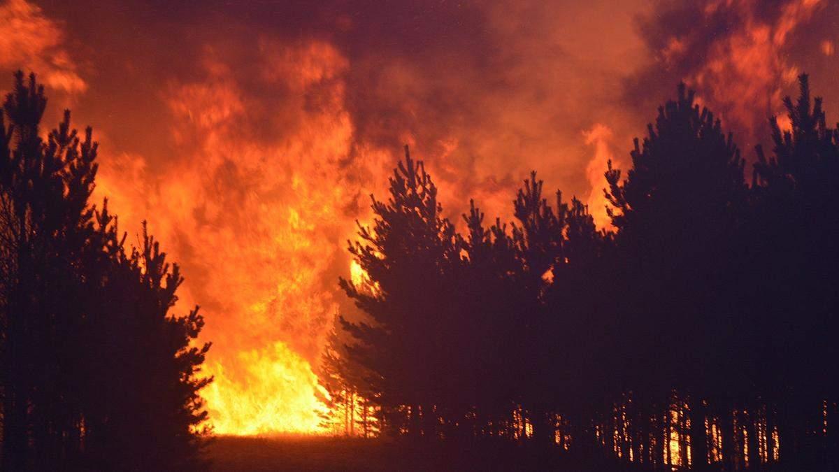 Парни пошли на барбекю и сожгли лес: студентов оштрафовали на 15 миллионов долларов