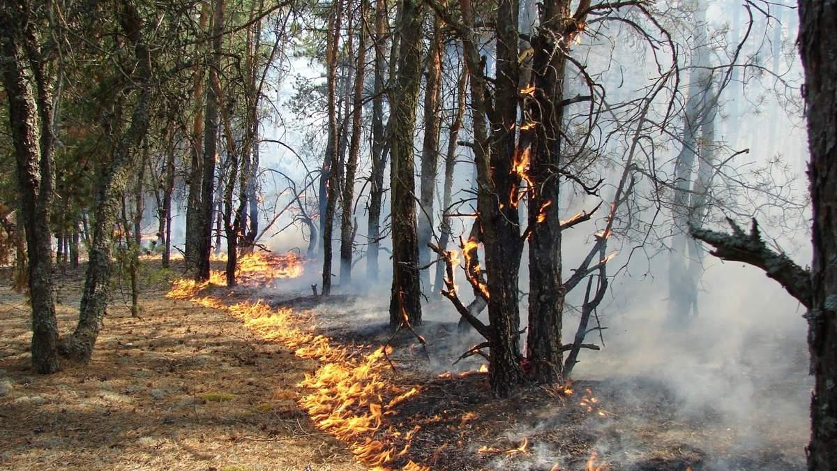 На Ровненщине горел один из крупнейших природных заповедников Украины: видео