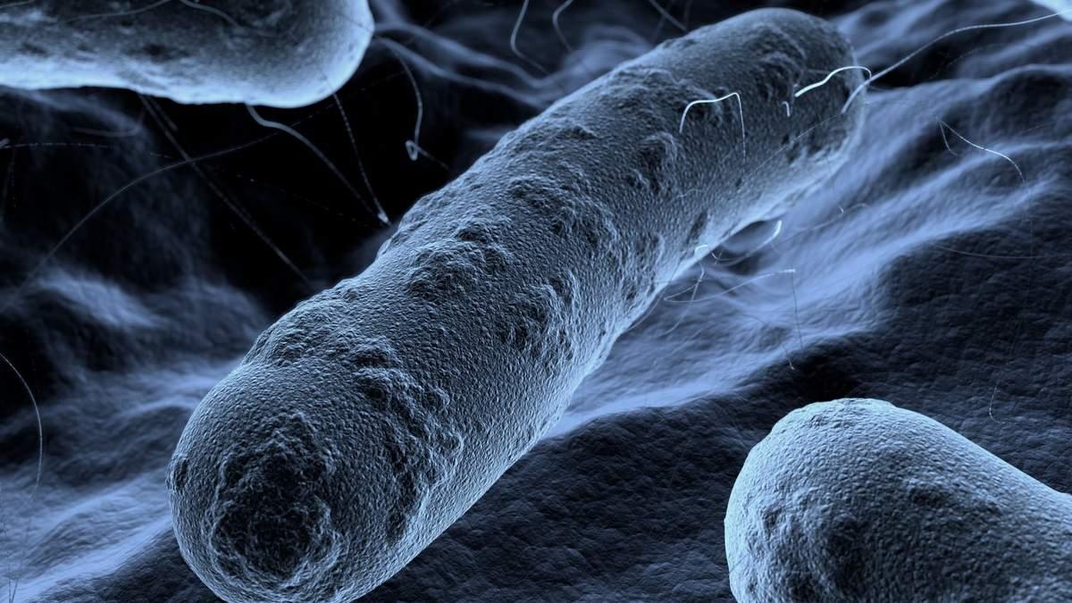 Искусственные бактерии
