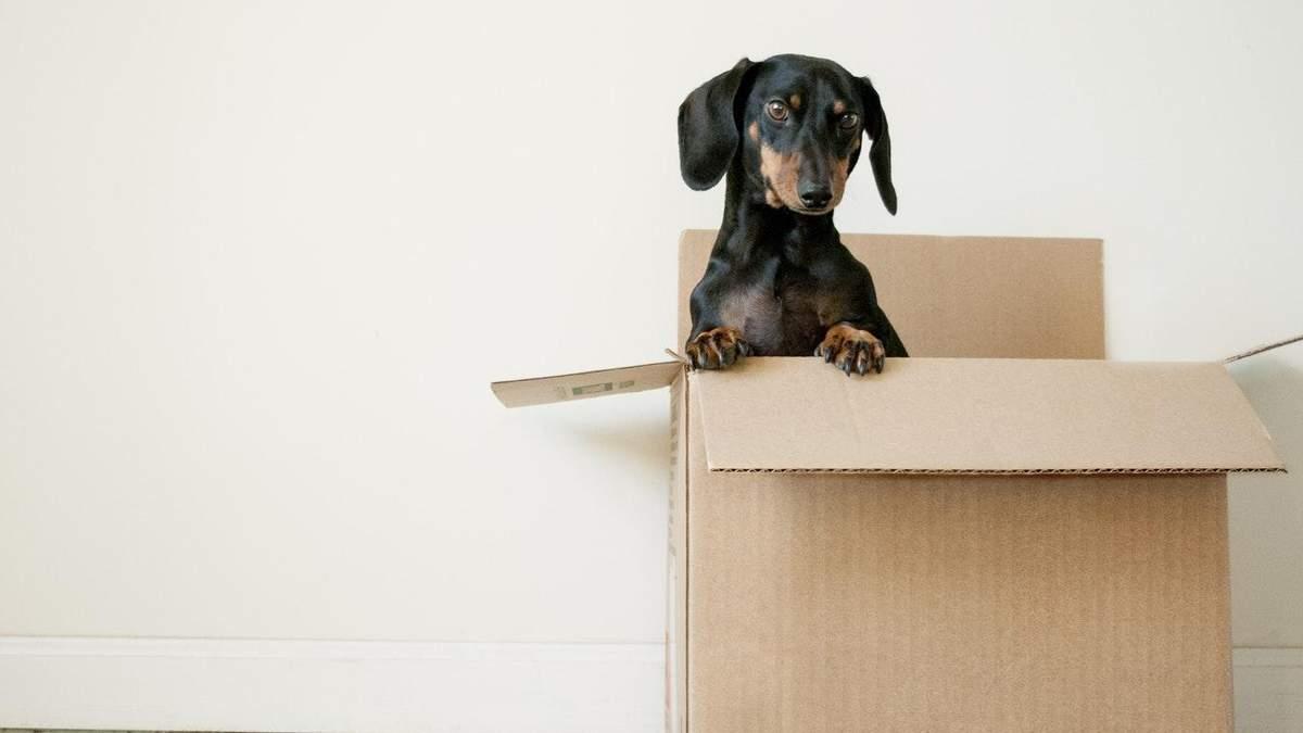 11 советов, как сделать переезд более простым